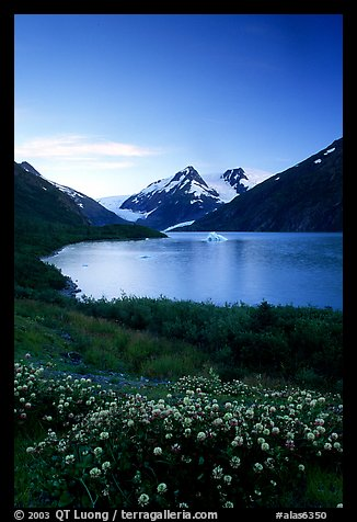 Wildflowers and Portage Lake at dusk. Alaska, USA (color)