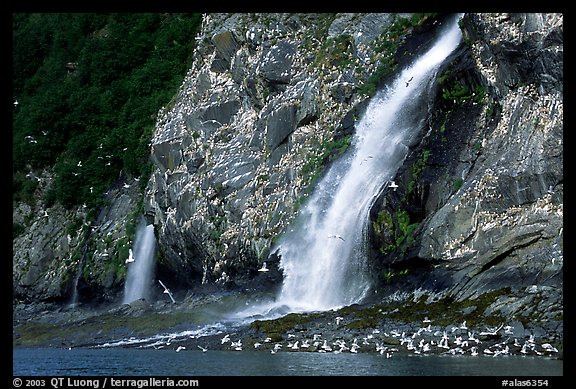 Waterfall and Seabirds. Prince William Sound, Alaska, USA (color)