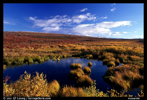 Tundra in autum colors and pond. Alaska, USA (color)
