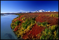 Susitna River and autumn colors on the tundra. Denali Highway, Central Alaska, USA