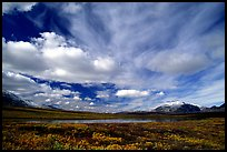 Tundra in fall color, lake, and sky dominated by large clouds. Alaska, USA