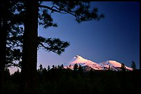 Pines and Mt Shasta seen from the North, sunset. California, USA