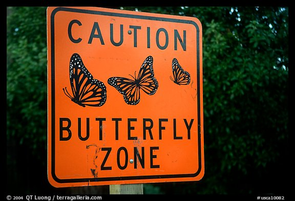 Monarch Butterfly sign. Pacific Grove, California, USA (color)