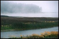 Humbolt Lagoon in the fog. California, USA ( color)