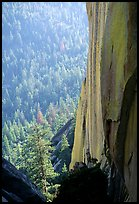 Rock wall and forest, the Needles,  Giant Sequoia National Monument. California, USA ( color)
