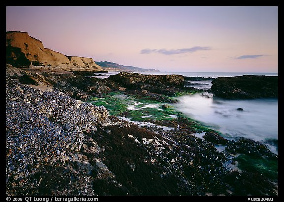 Mussel-covered rocks, seaweed and cliffs, sunset. California, USA (color)