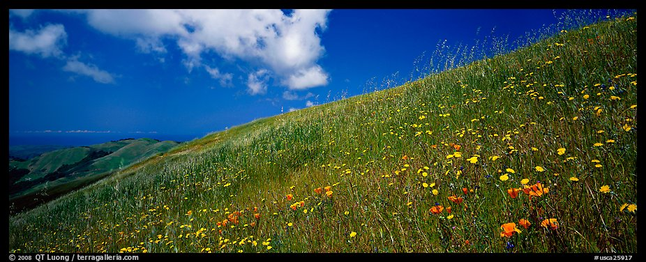 Landscape with grassy hills, wildflowers, and cloud. Palo Alto,  California, USA (color)