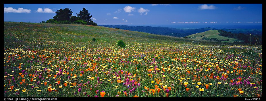 Spring landscape with wildflower carpet. Palo Alto,  California, USA (color)