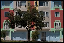 Tree and colorful house. San Francisco, California, USA