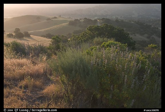 Bush and hills, sunrise. California, USA (color)