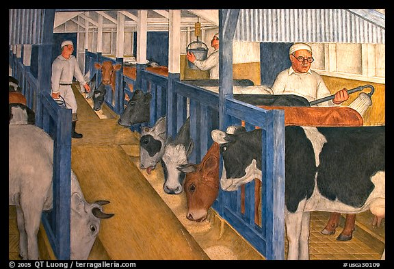 Cows in a farm depicted in a fresco inside Coit Tower. San Francisco, California, USA (color)