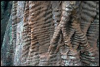 Bark texture of a redwood tree. Big Basin Redwoods State Park,  California, USA (color)