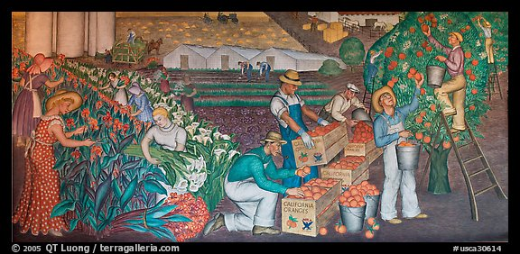 Orange-harvesting  scene depicted in a fresco inside Coit Tower. San Francisco, California, USA (color)
