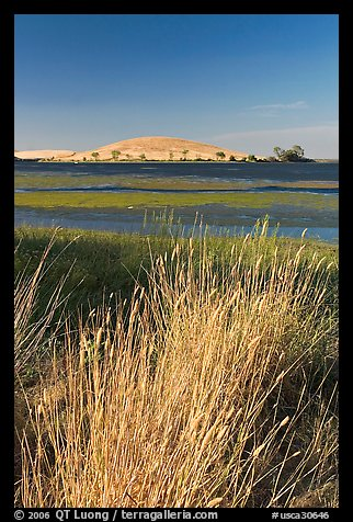 Summer grasses, Oneill Forebay, San Luis Reservoir State Recreation Area. California, USA (color)