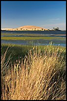 Summer grasses, Oneill Forebay, San Luis Reservoir State Recreation Area. California, USA ( color)