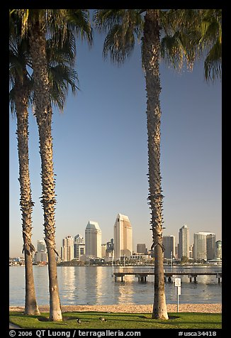 Skyline framed by palm trees from Coronado. San Diego, California, USA (color)