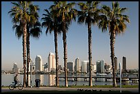 Bicyclist, palm trees and skyline, Coronado. San Diego, California, USA (color)