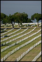 Fort Rosecrans National Cemetary, the third largest in the US. San Diego, California, USA (color)