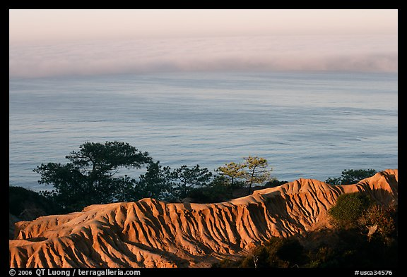 Eroded bluffs, ocean and fog, sunrise, Torrey Pines State Preserve. La Jolla, San Diego, California, USA (color)