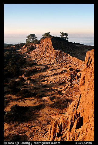 Steep weathered sandstone cliffs, Torrey Pines State Preserve. La Jolla, San Diego, California, USA (color)
