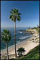 Palm trees and Rockpile Beach. Laguna Beach, Orange County, California, USA (color)