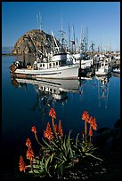 Flowers, fishing boats,and Morro Rock, morning. Morro Bay, USA ( color)