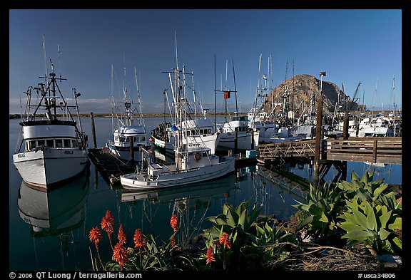 Flowers, harbor, and Morro Rock, morning. Morro Bay, USA (color)