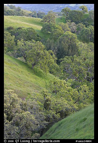 Oaks and hills in late spring. San Jose, California, USA (color)