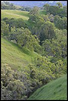 Oaks and hills in late spring. San Jose, California, USA