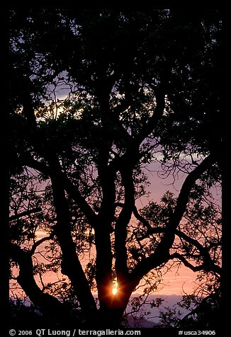 Oak tree and sun. San Jose, California, USA (color)