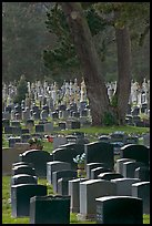 Dense headstones in cemetery, Colma. California, USA