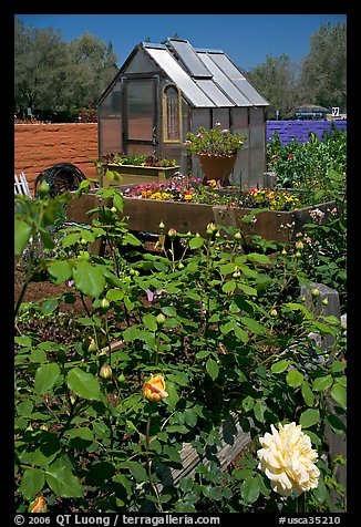 Flowers and small greenhouse, Sunset Gardens. Menlo Park,  California, USA (color)