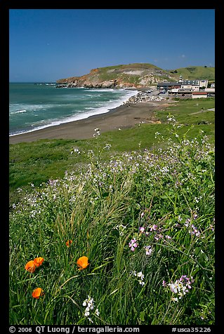 Wildflowers and and Rockaway beach, Pacifica. San Mateo County, California, USA (color)