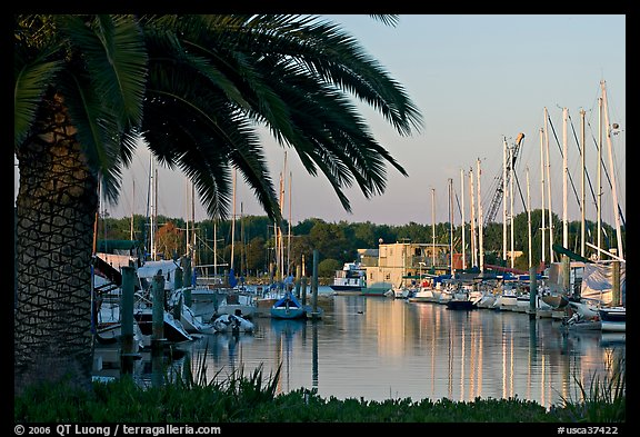 Palm tree and marina. Redwood City,  California, USA (color)