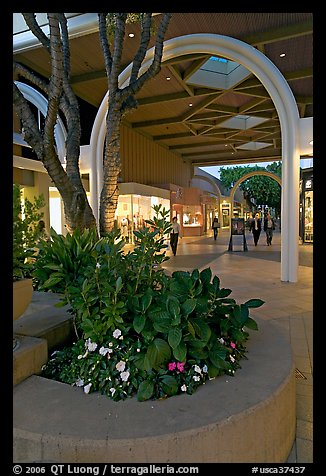 Flowers and arches, Stanford Shopping Mall, dusk. Stanford University, California, USA (color)