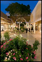 Vegetation and stores in main alley of Stanford Mall at night. Stanford University, California, USA ( color)