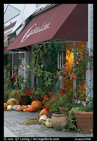 Art gallery decorated with large pumpkins. Half Moon Bay, California, USA (color)