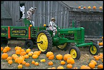 Green tractor, pumpkins, figures, and barn. Half Moon Bay, California, USA ( color)