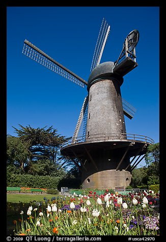 Tulips and Historic Dutch Windmill, Golden Gate Park. San Francisco, California, USA