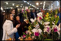Women look at orchids during festival, Mason Center. San Francisco, California, USA ( color)