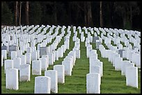 Rows of headstones, San Francisco National Cemetery, Presidio. San Francisco, California, USA ( color)