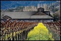 Winery in spring with yellow mustard flowers. Napa Valley, California, USA (color)