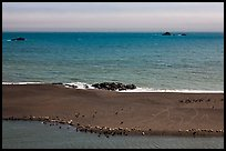 Marine mammals on sand spit from above, Jenner. Sonoma Coast, California, USA (color)
