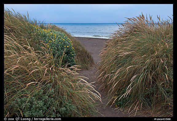 Dune grass and Ocean at dusk, Manchester State Park. California, USA (color)