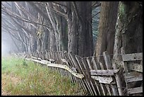 Old fence and row of trees in fog. California, USA (color)