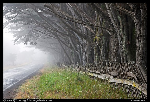 Fence, trees, and road in fog. California, USA (color)