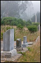 Foggy cemetery, Manchester. California, USA (color)