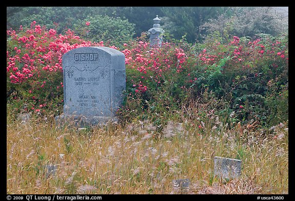 Headstone and wildflowers in fog, Manchester. California, USA (color)