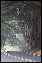 Highway curve, trees an fog. California, USA (color)