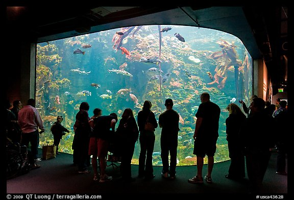 Tourists in front of large tank, Steinhart Aquarium, California Academy of Sciences. San Francisco, California, USA (color)